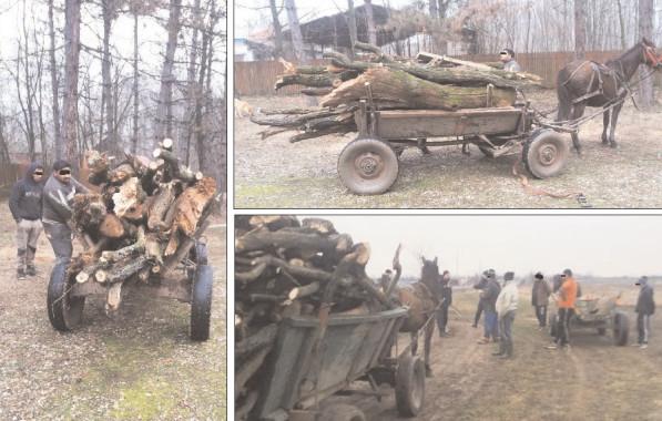 Jandarmii continuă acţiunile pe linia prevenirii faptelor la regimul silvic