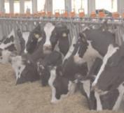 31 ianuarie – termenul limită pentru solicitarea plăţilor privind bunăstarea animalelor