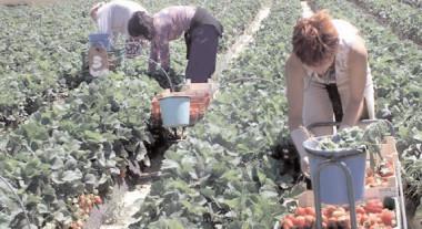 Peste 1100 de locuri de muncă în agricultură, în Spania şi Marea Britanie