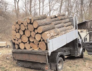 Jandarmii dâmboviţeni continuă acţiunile privind furturile de lemn