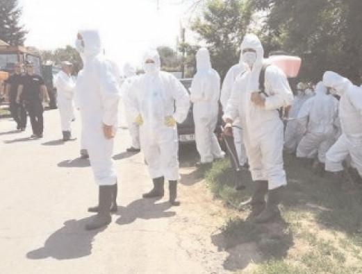 Modalităţile de transmitere ale virusului pestei porcine africane