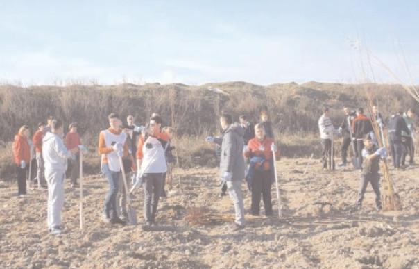 Ministerul Agriculturii a stabilit calendarul de depunere a cererilor de sprijin pentru împăduriri şi servicii de silvomediu