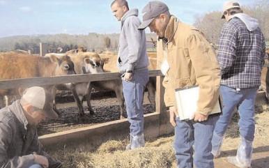 APIA a început plăţile pentru fermierii care au solicitat Ajutoare Naţionale Tranzitorii