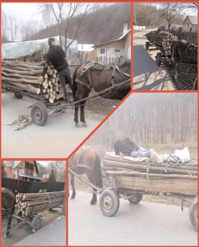 Jandarmii dâmboviţeni, cu ochii pe hoţii de lemne