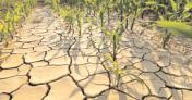 Fermierii afectaţi de secetă trebuie să se adreseze primăriilor