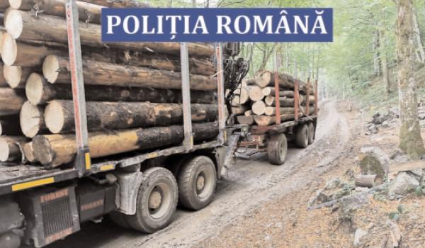1.120 de controale efectuate pentru verificarea operaţiunilor cu material lemnos