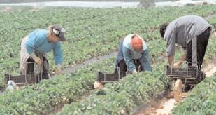 APIA: 218 fermieri aleşi aleatoriu vor fi verificaţi prin control clasic sau teledetecţie