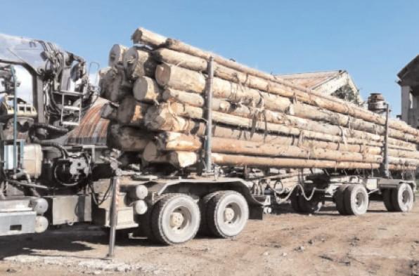 CONTROALE PENTRU PROTEJAREA FONDULUI FORESTIER