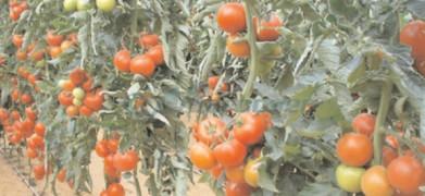 Noi reglementări fitosanitare pentru produse vegetale