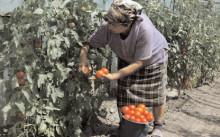 APIA lansează trei scheme noi de sprijin pentru fermieri!