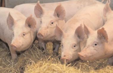 109 exploataţii agricole din Ulmi, selectate pentru Recensământul Agricol de Probă