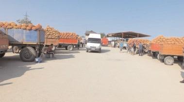 APIA Dâmboviţa: 4548 fermieri au solicitat sprijinul de stat pentru atenuarea pierderilor generate de pandemie