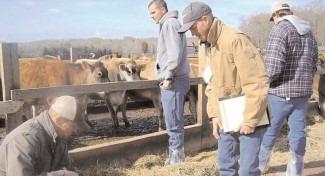 APIA: 98% din fermierii dâmboviţeni au primit plăţile în avans