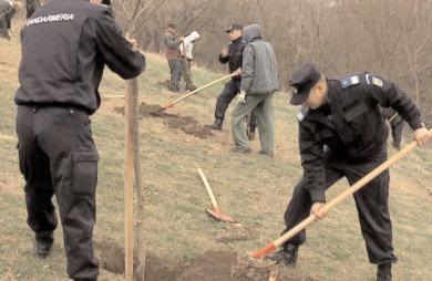 """""""171 de stejari pentru România"""", misiune inedită pentru Jandarmeria Dâmboviţa"""