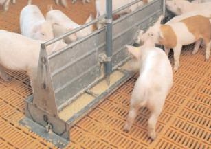 Hrana animalelor controlată de Autoritatea Sanitară Veterinară și pentru Siguranța Alimentelor