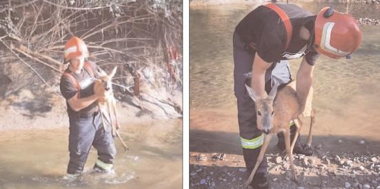 Pompierii au salvat un pui de căprioară