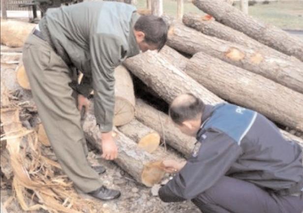 PROTEJAREA FONDULUI FORESTIER ÎN ATENŢIA POLIŢIŞTILOR