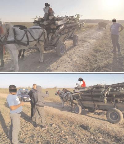 Jandarmii au continuat acţiunile pentru prevenirea şi combaterea furtului de lemne