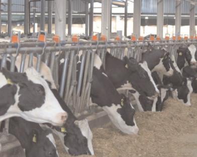 APIA primeşte cereri de plată pentru 2019, în cadrul Măsurii M14 – Bunăstarea animalelor