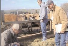 Începând cu 1 martie, fermierii dâmboviţeni sunt aşteptaţi la APIA, pentru depunerea cererilor unice de plată