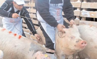 APIA: 15 februarie, data limită pentru înregistrarea cererilor de plată pentru Măsura 14 – Bunăstarea animalelor