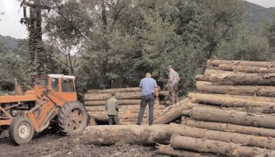 Pe raza judeţului Dâmboviţa, ample acţiuni de verificare a legalităţii operaţiunilor cu material lemnos