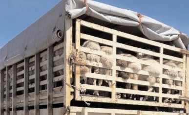 Reguli suplimentare pentru protecţia animalelor, în timpul transportului