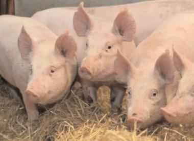APIA: Ultimele zile pentru depunerea cererilor de plată aferente Măsurii 14 – Bunăstarea animalelor
