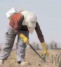 Autorităţile bavareze pun la dispoziţia muncitorilor sezonieri un film de informare titrat în limba română