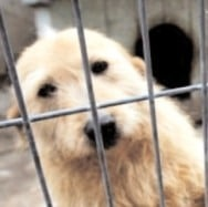 Măsuri pentru a facilita adopţia câinilor fără stăpân