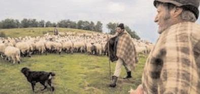 APIA eliberează fermierilor adeverinţe pentru accesarea creditelor pentru activităţi curente