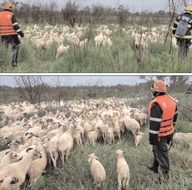 Intervenţie de salvare a unui cioban şi a 800 de oi