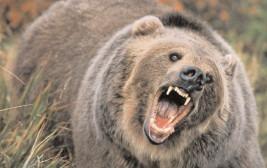 OUG privind intervenţia în cazul atacurilor urşilor