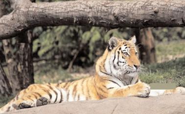 Intrare gratuită la Grădina Zoologică Târgoviște, 9 august 2021, de Ziua Internațională a Grădinilor Zoologice și Parcurilor